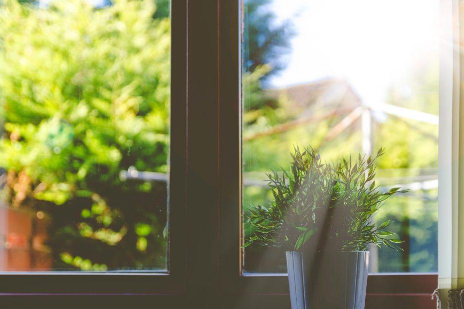Sonnenergie zu hause - Pflanze am Fenster im Sonnenschein