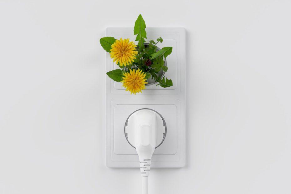 Steckdose mit Stecker und Löwenzahn Pflanze als Symbol für grünen Strom