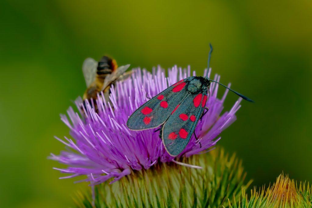 Insektenhilfe