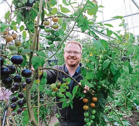 Traumhafte Tomaten – Thorsten Thron züchtet in Neubiberg Sorten aus aller Welt